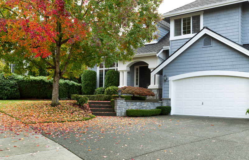 front of suburban house with large tree in front yard
